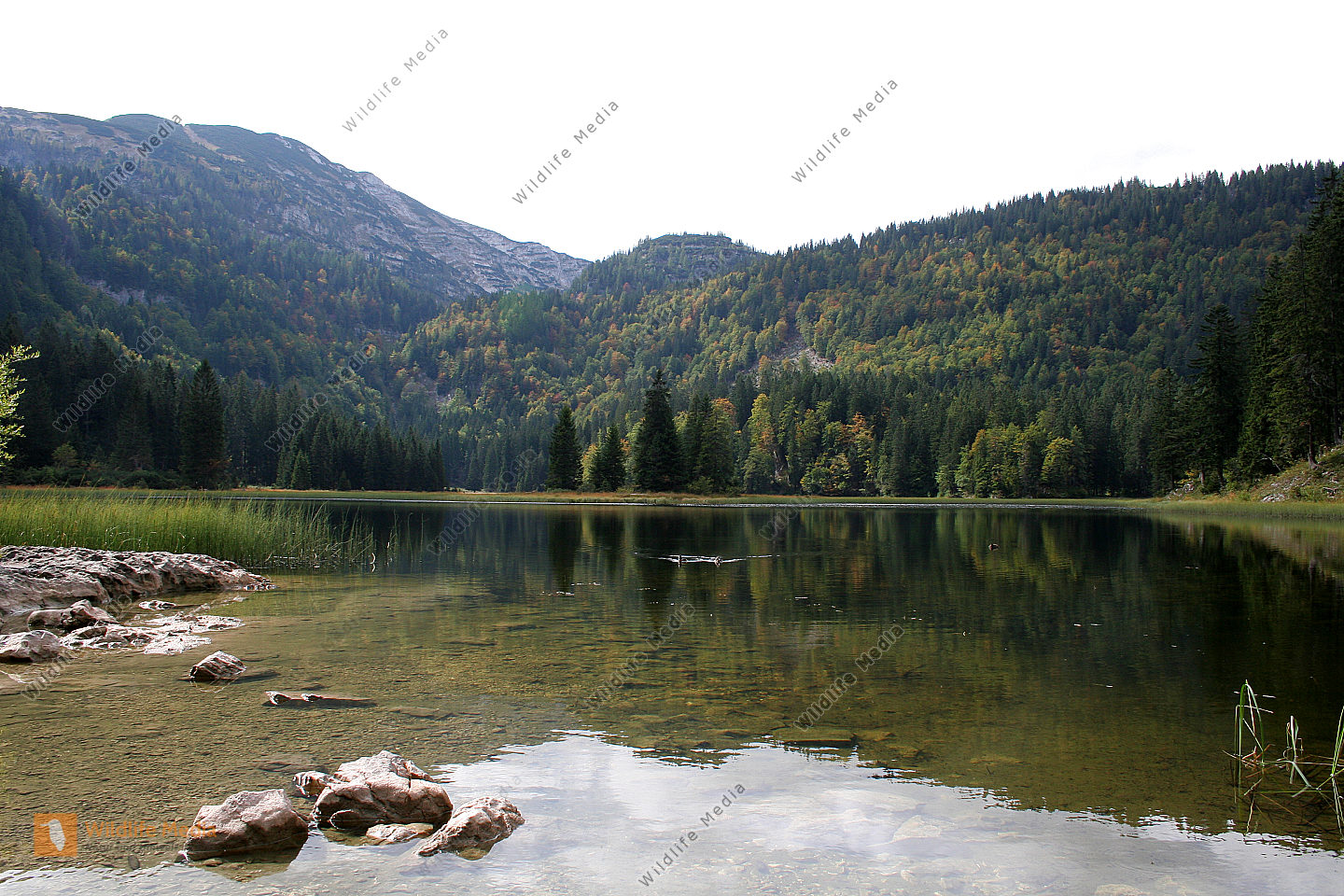 Lunzer Obersee