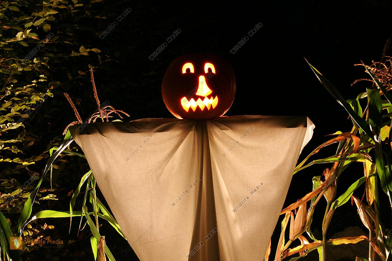Halloweenkürbis
