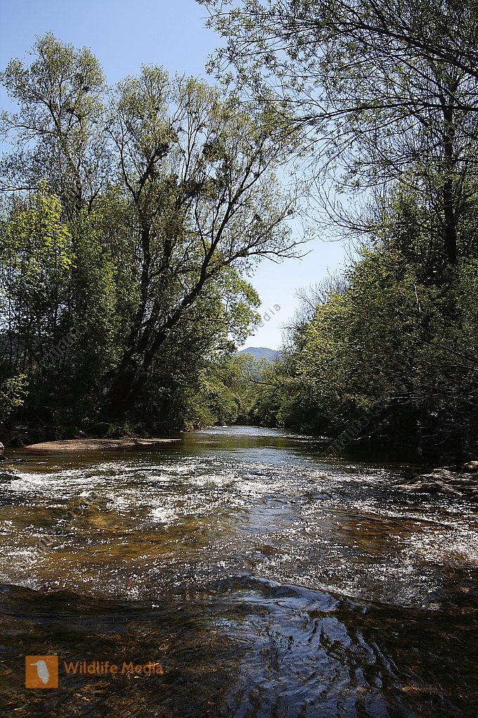 Flußau