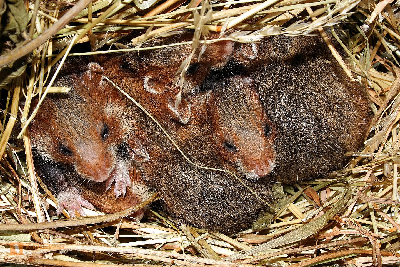 Bilderverzeichnis wildlife media bildagentur natur und for Bilder fa r kinderzimmer junge