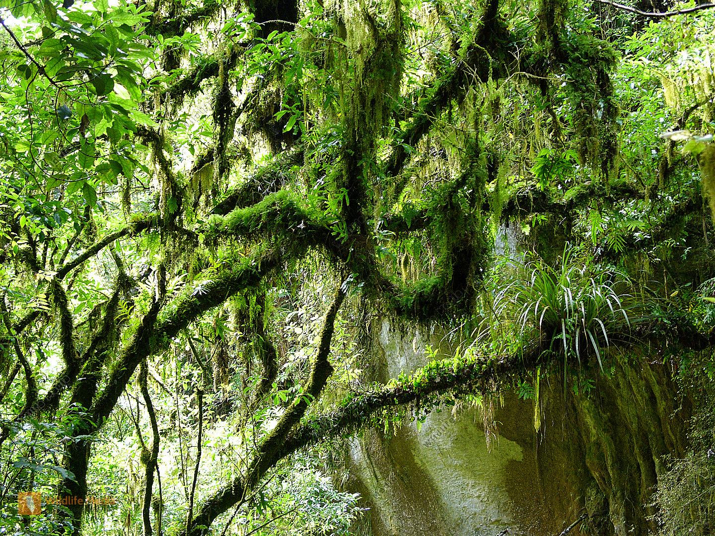 urwald  wildlife media die naturbildagentur