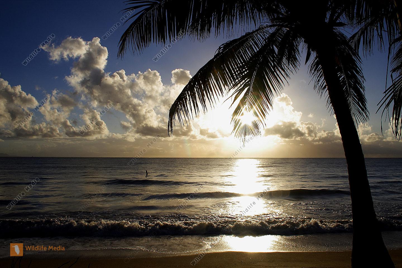 bestellen sandstrand mit palmen sandstrand mit palmen bild bildagentur. Black Bedroom Furniture Sets. Home Design Ideas