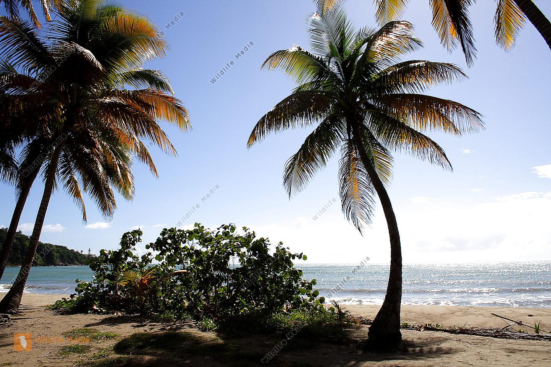 bestellen sandstrand mit palmen sandstrand mit palmen. Black Bedroom Furniture Sets. Home Design Ideas