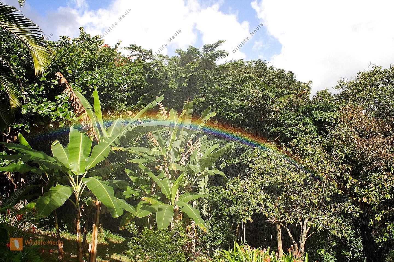 Regenbogen im Regenwald
