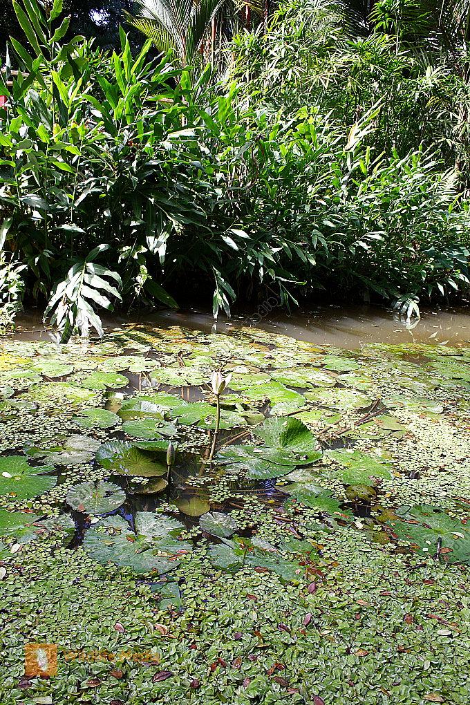 Regenwaldbiotop