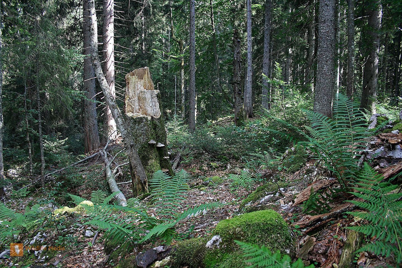 Europäischer Urwald