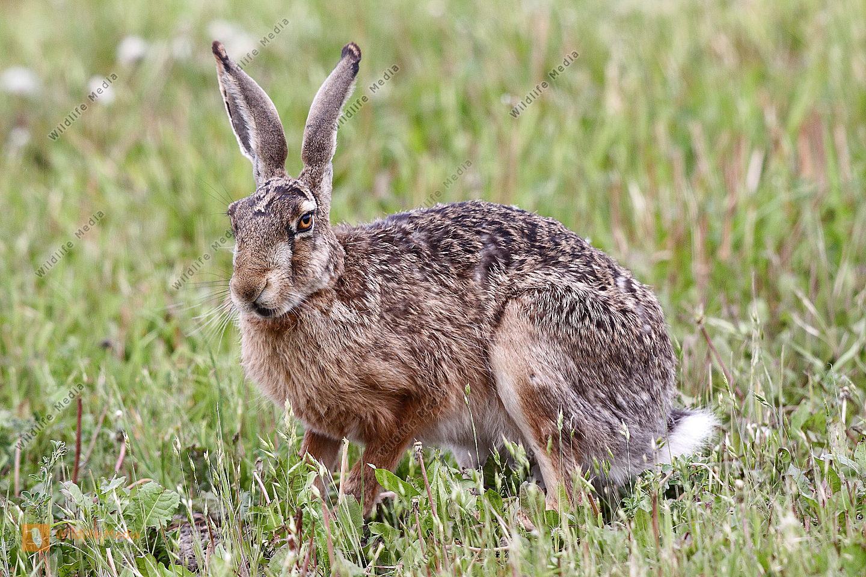werden hasen gern getragen tiere kaninchen tragen. Black Bedroom Furniture Sets. Home Design Ideas
