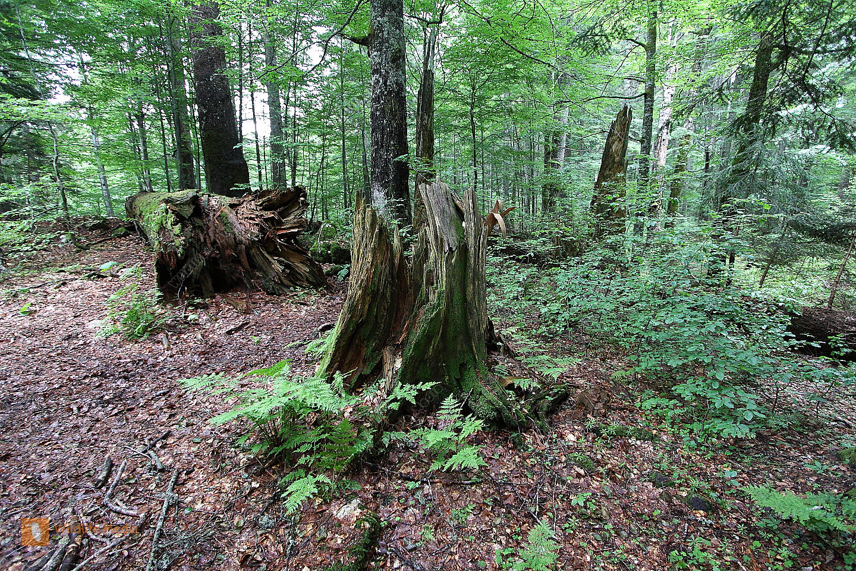 Umgstürzter Baum