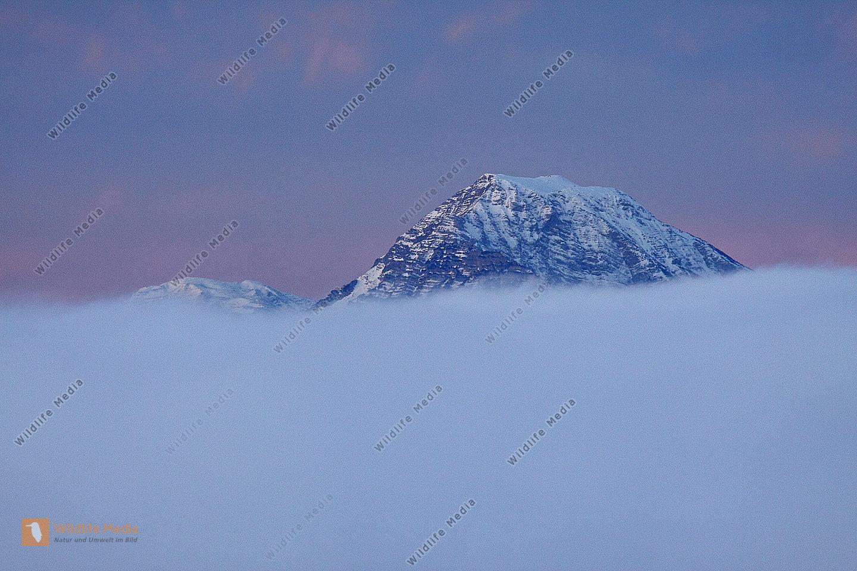 Ötscher im Nebelmeer