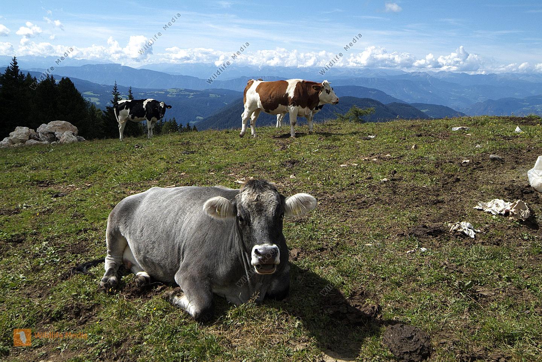 Viehzucht