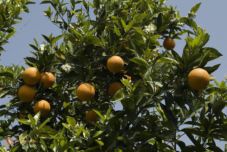 Botanik, Früchte