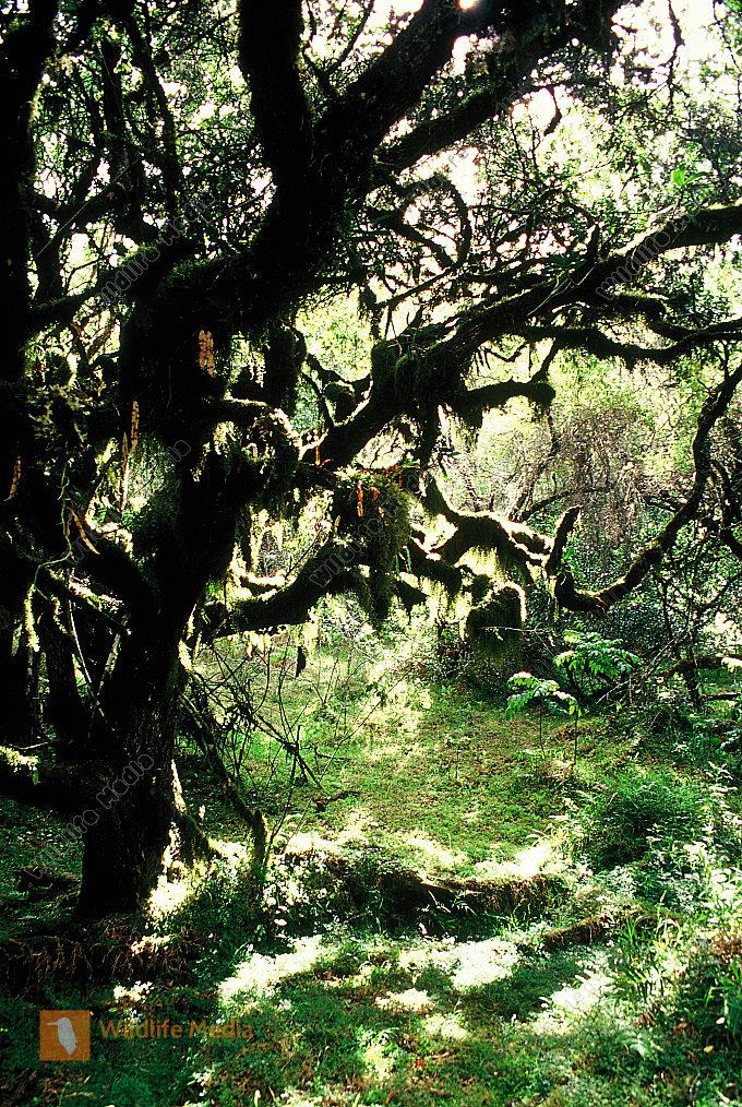 Afrikanischer Urwald