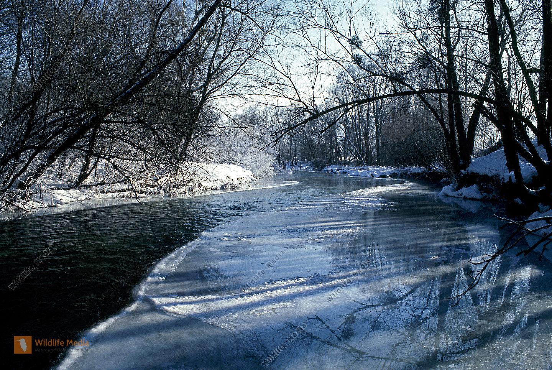 Auwald im Winter