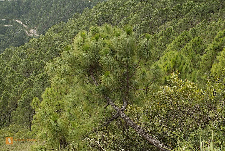 Bhutan - Botanik