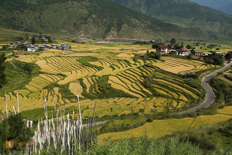 Bhutan, Punakha