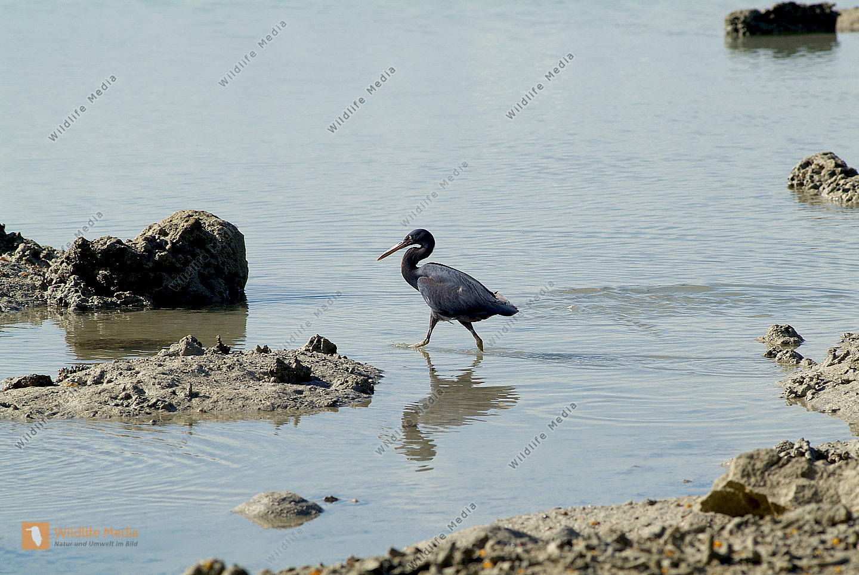 Fidschi - Vögel