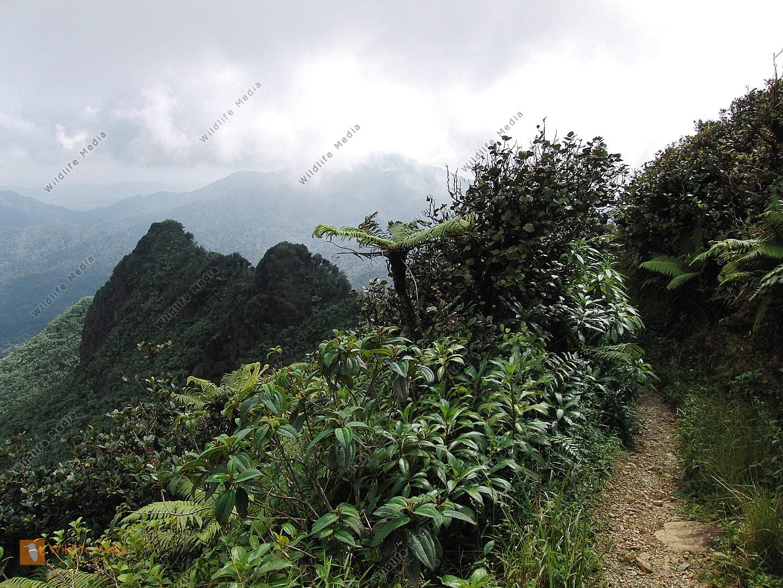 Karibischer Regenwald