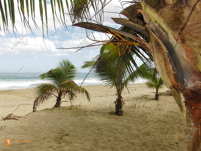 Palmenstrand