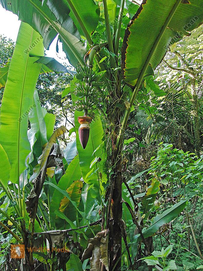 exotische pflanzen bilder von johann zapfe wildlife. Black Bedroom Furniture Sets. Home Design Ideas