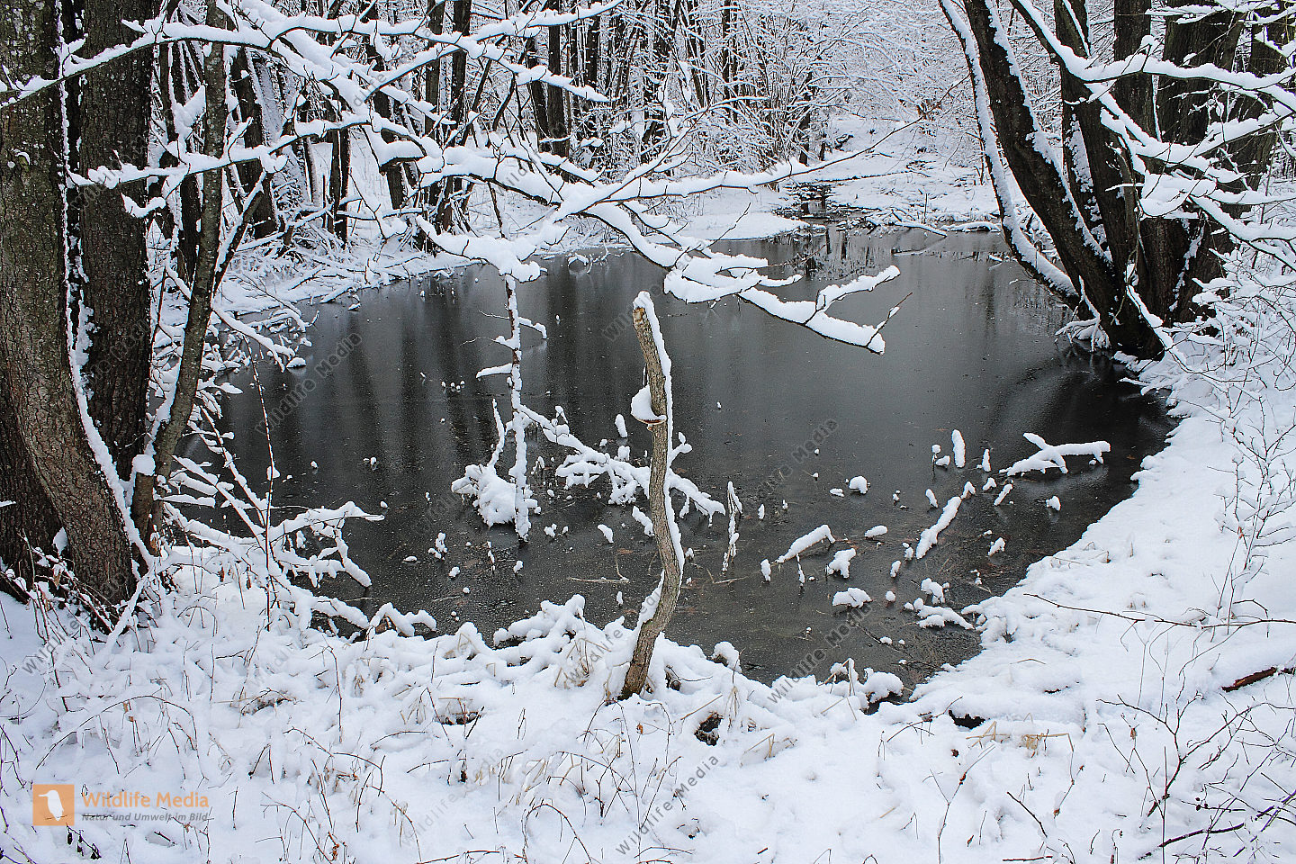 Bestellen teich im winter teich im winter bild for Fische teich winter