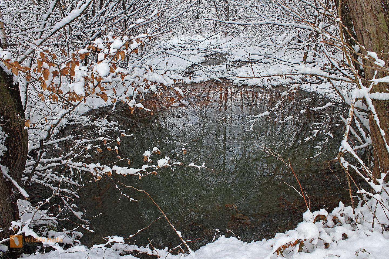 Bestellen teich im winter teich im winter bild for Teich winter