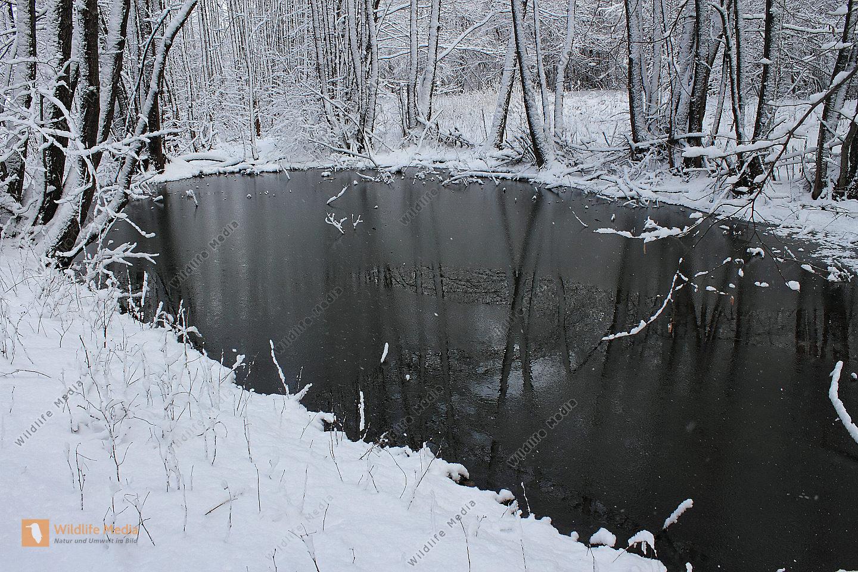 Waldteich bilder wildlife media bildagentur natur und for Goldfische im winter im teich