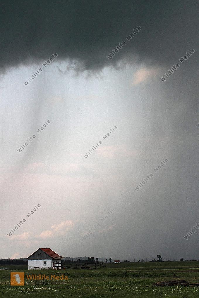 Regenstimmung in der Pusta
