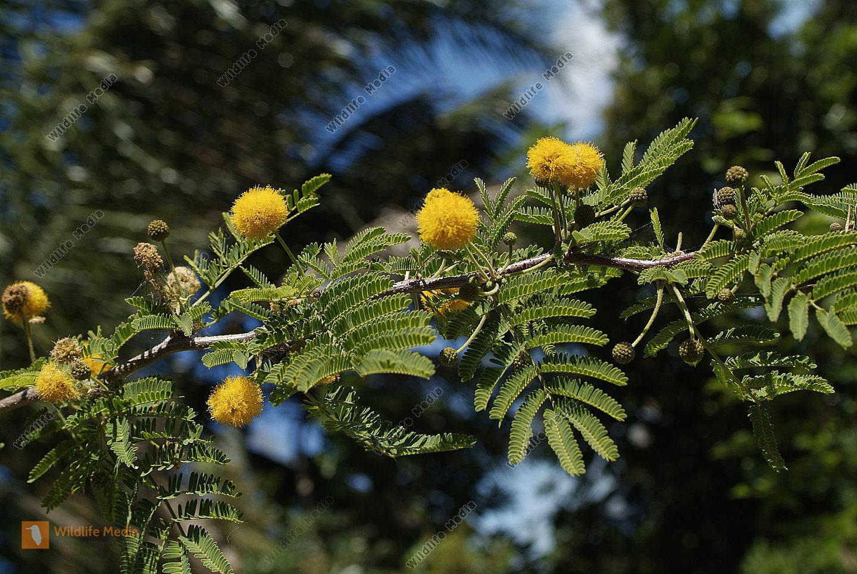 Australia Botany