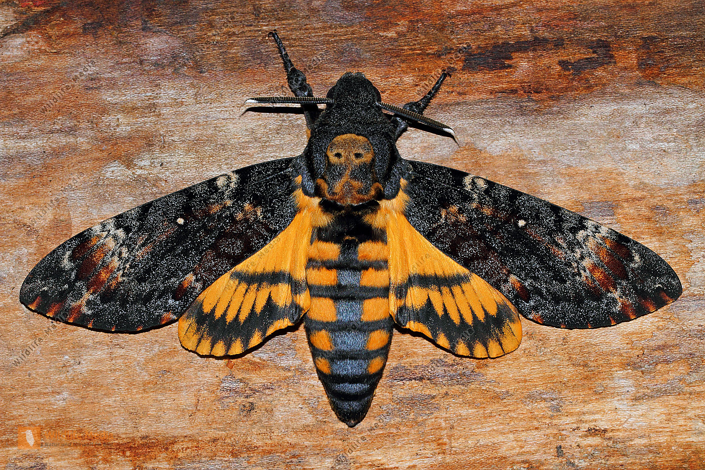The death of the moth essay