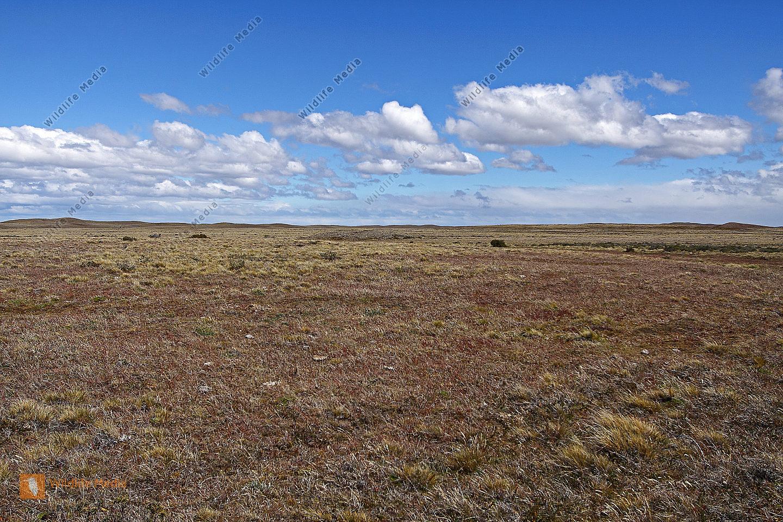 Pampalandschaft