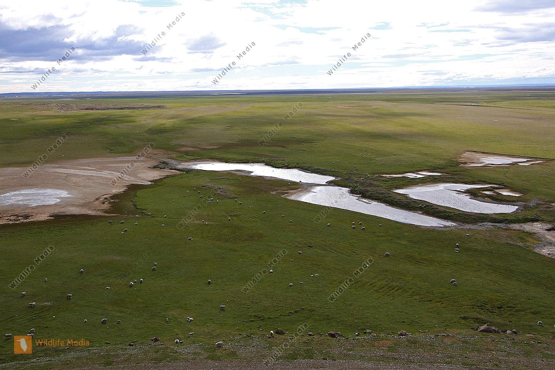 Feuerländische Steppenlandschaft