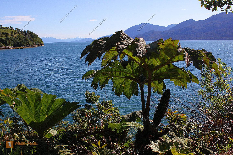 Patagonischer Fjord
