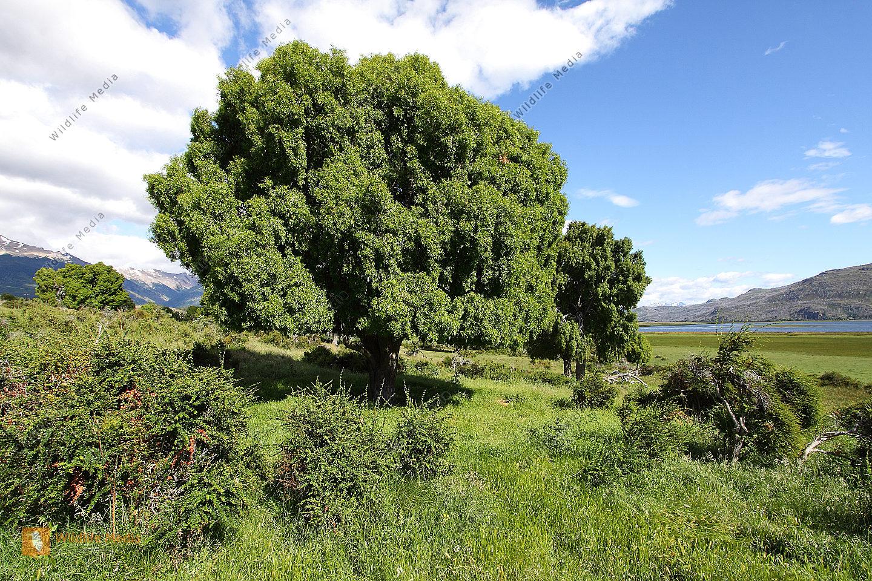 Chilenische Buschlandschaft
