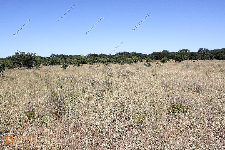 Argentinisches Buschland