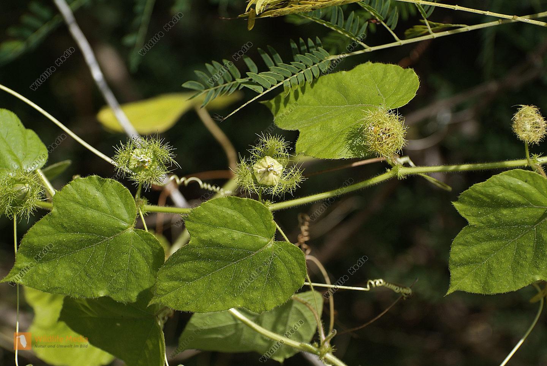 Australia - Botany