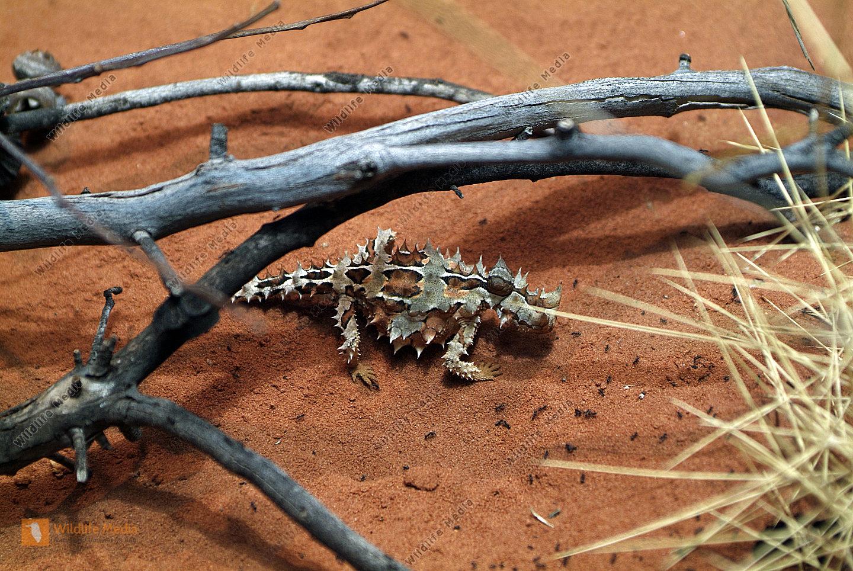Australien - Zoologie