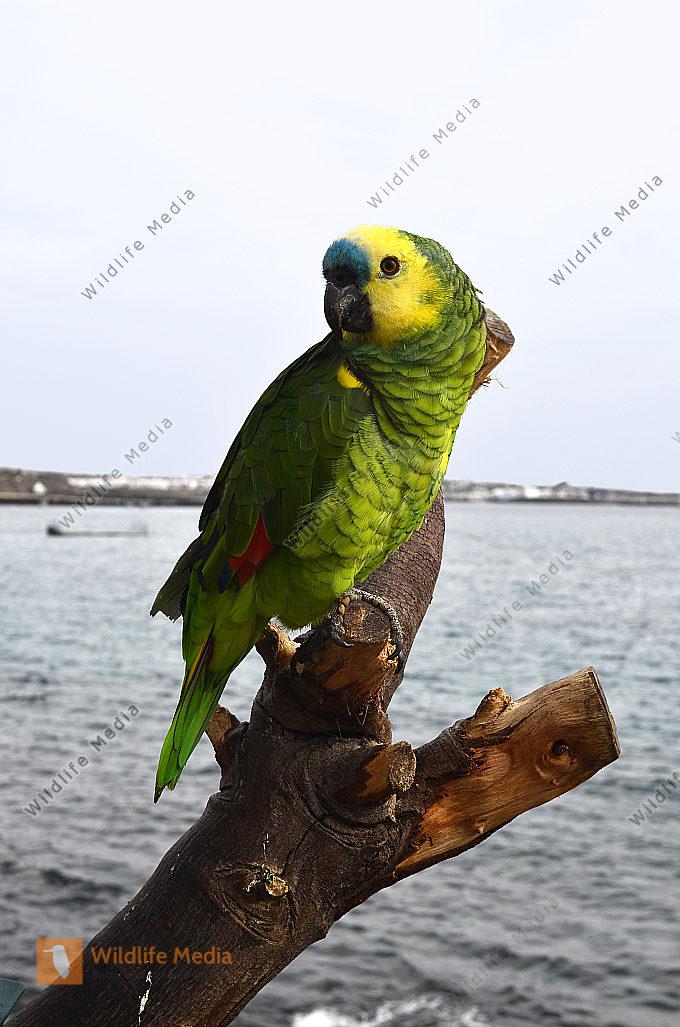 Zoologie - Vögel
