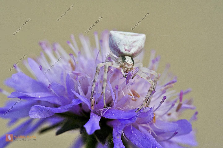 Webspinnen