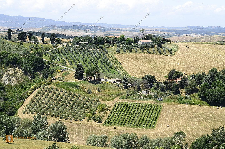 Italien landwirtschaft bild herunterladen