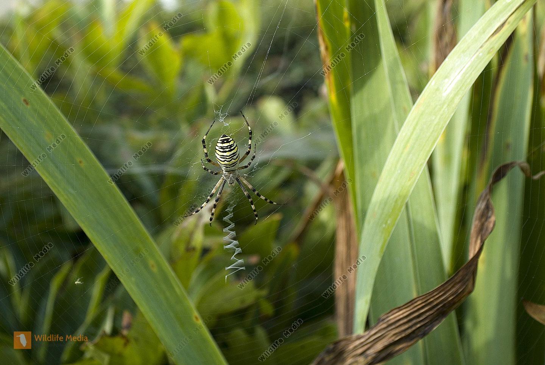 Zoologie - Spinnen