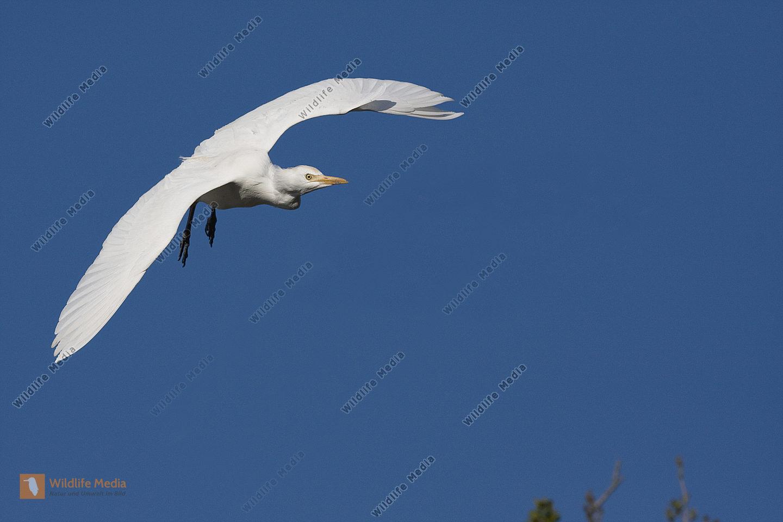 Flugaufnahme Flug fliegend, flying,flight