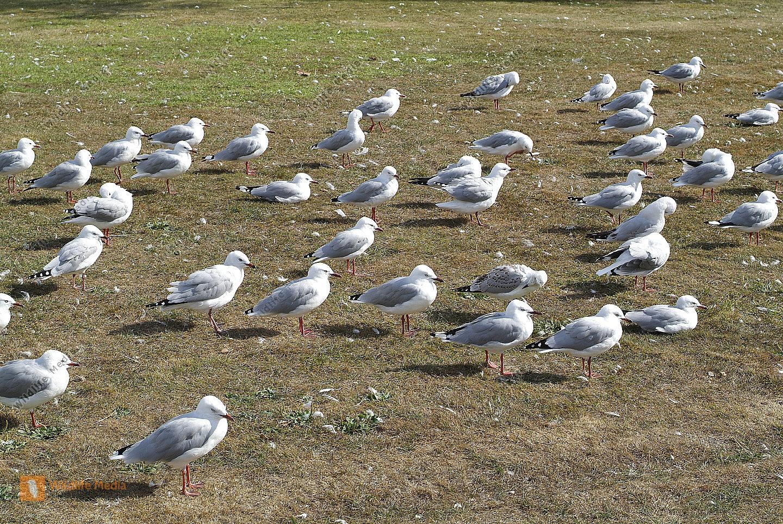 Zoologie -Vögel