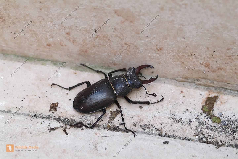 Zoologie - Insekten
