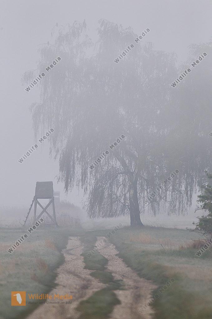 Nebelstimmung am Morgen
