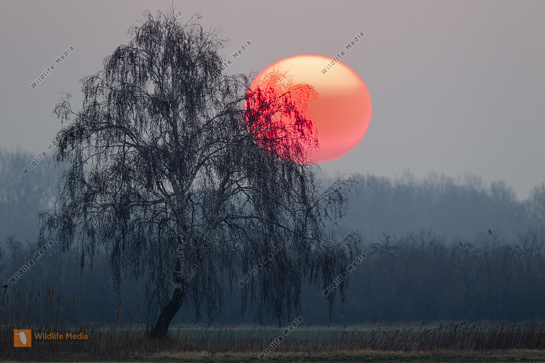 Sonnenaufgang im Hansag
