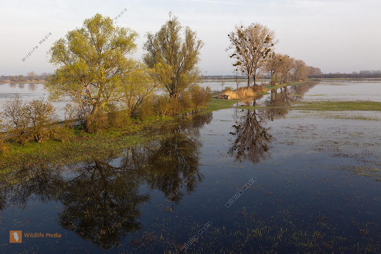 Morgenstimmung im überschwemmten Hansag