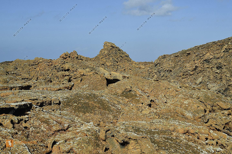 Spanien Lanzarote erstarrte Lava im Timanfaya Nationapark