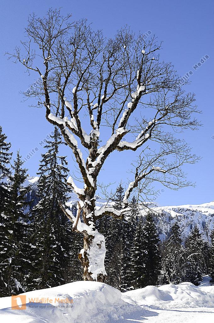Österreich Winter