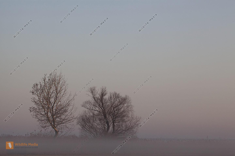 Sonnenaufgang und Nebelstimmung