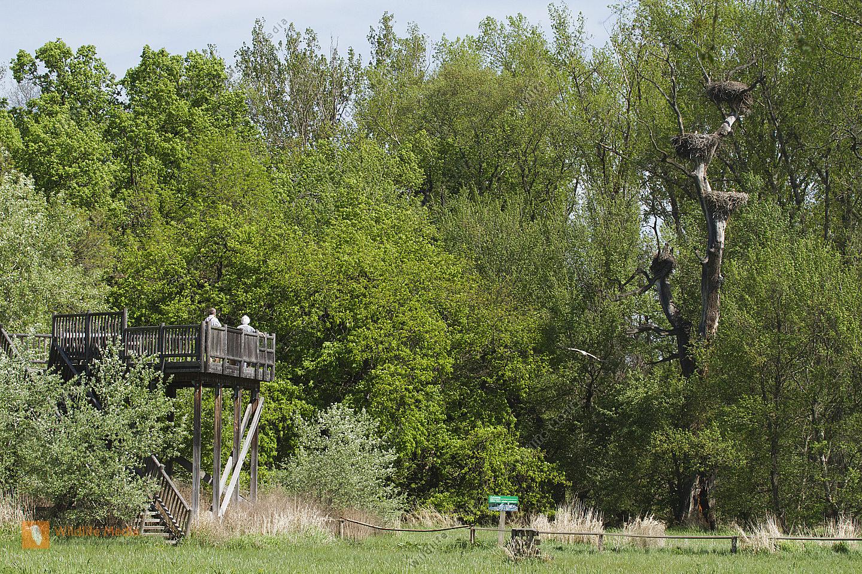 Storchenhorste in Marchegg